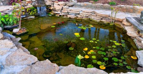 Sedgley road aquarium pond specialist west midlands for Good fish pond plants