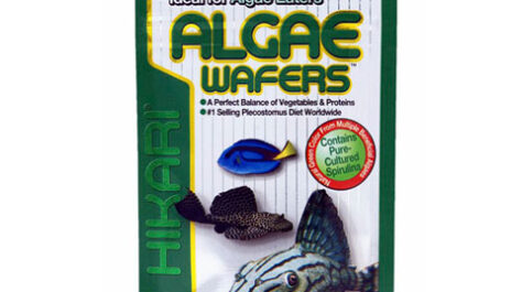 Hikari Algae Wafers 20g